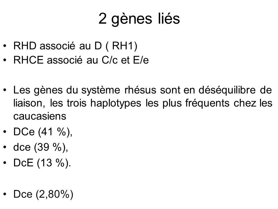2 gènes liés RHD associé au D ( RH1) RHCE associé au C/c et E/e Les gènes du système rhésus sont en déséquilibre de liaison, les trois haplotypes les