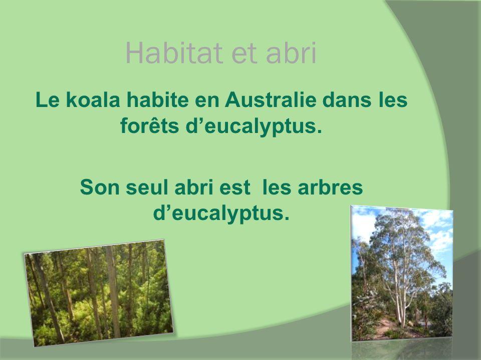 Habitat et abri Le koala habite en Australie dans les forêts deucalyptus. Son seul abri est les arbres deucalyptus.