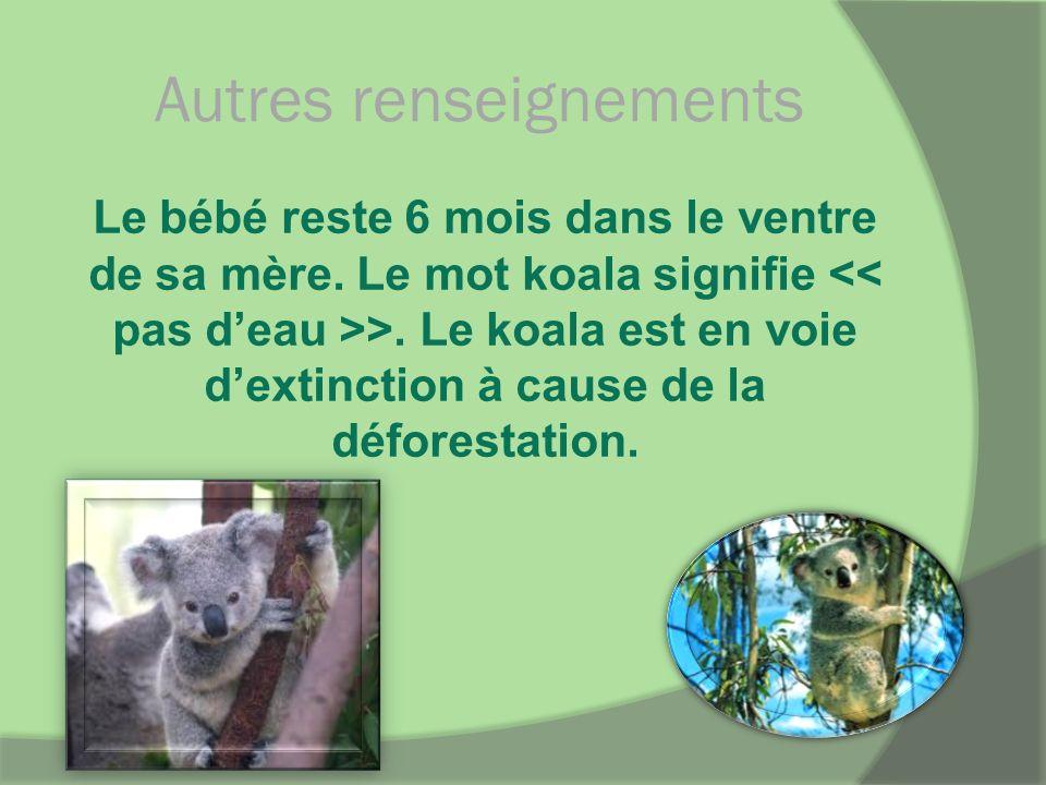 Autres renseignements Le bébé reste 6 mois dans le ventre de sa mère. Le mot koala signifie >. Le koala est en voie dextinction à cause de la déforest