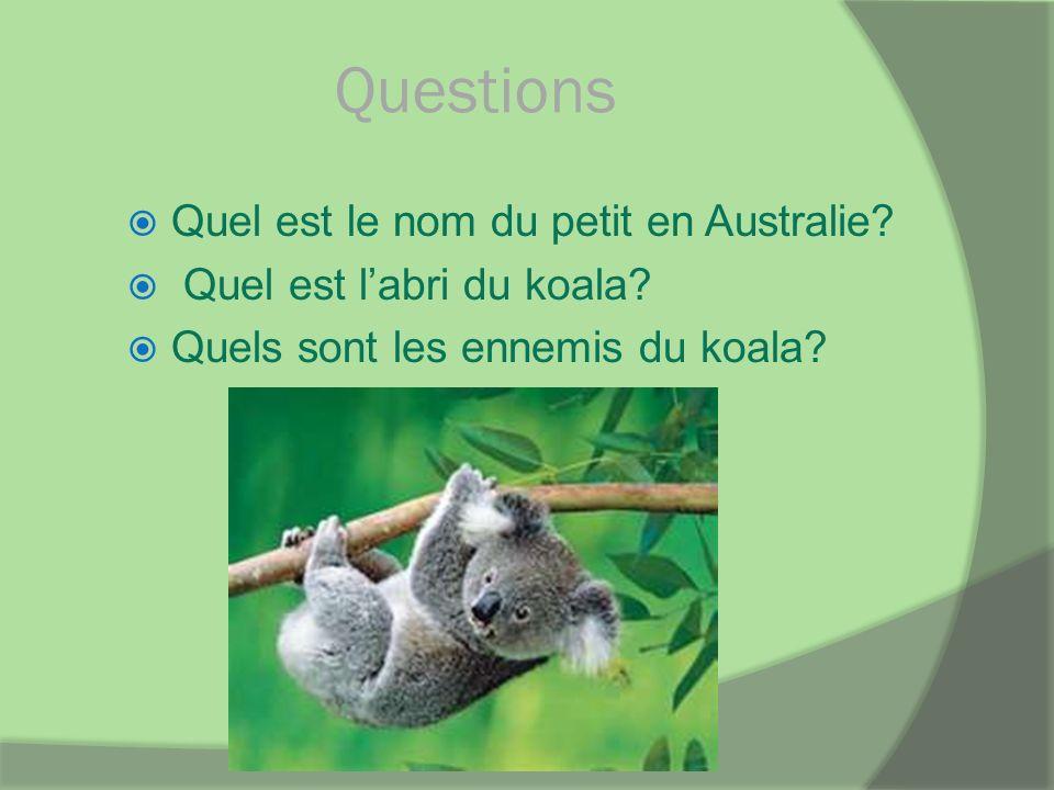 Questions Quel est le nom du petit en Australie? Quel est labri du koala? Quels sont les ennemis du koala?