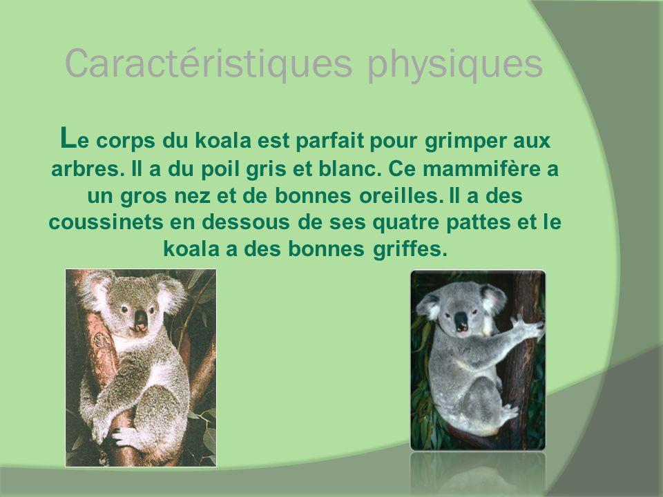 Caractéristiques physiques L e corps du koala est parfait pour grimper aux arbres. Il a du poil gris et blanc. Ce mammifère a un gros nez et de bonnes