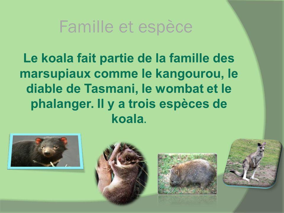 Famille et espèce Le koala fait partie de la famille des marsupiaux comme le kangourou, le diable de Tasmani, le wombat et le phalanger. Il y a trois