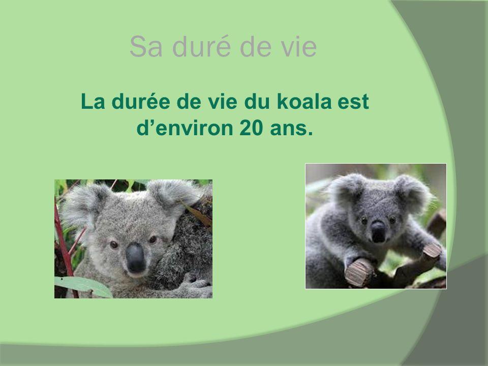 Sa duré de vie La durée de vie du koala est denviron 20 ans.