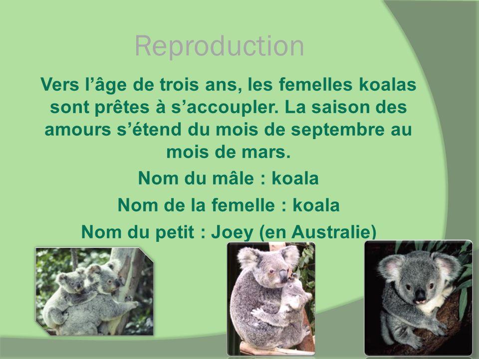Reproduction Vers lâge de trois ans, les femelles koalas sont prêtes à saccoupler. La saison des amours sétend du mois de septembre au mois de mars. N