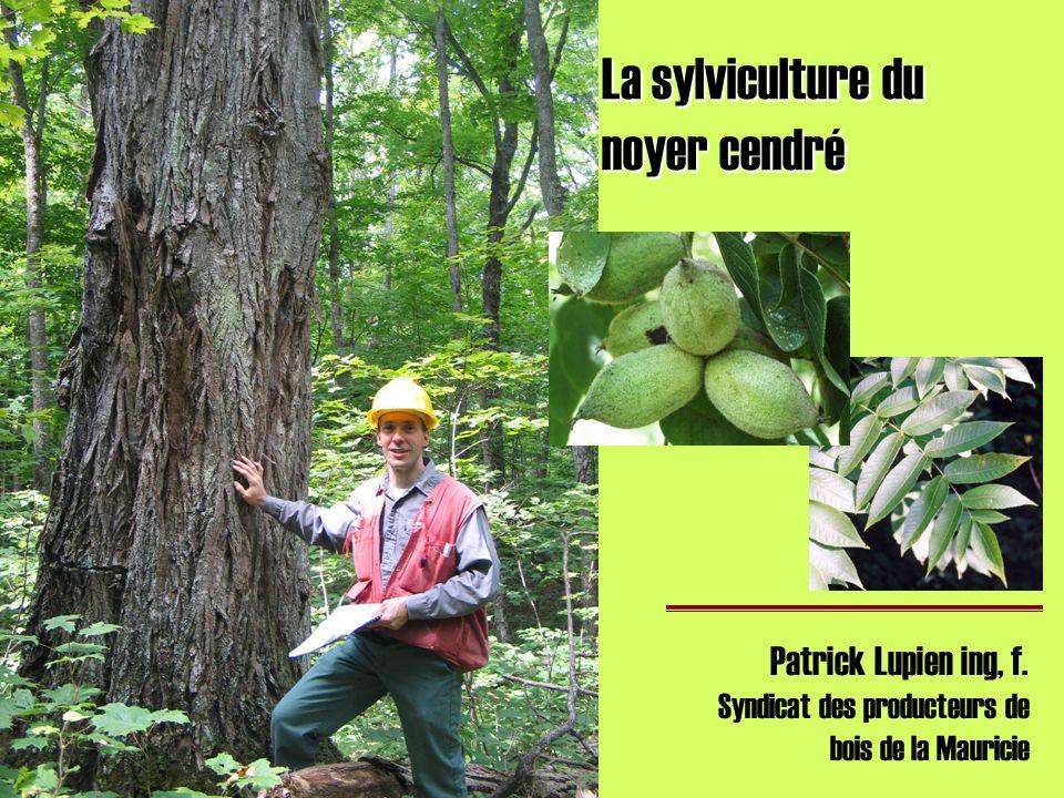 La sylviculture du noyer cendré Patrick Lupien ing, f. Syndicat des producteurs de bois de la Mauricie