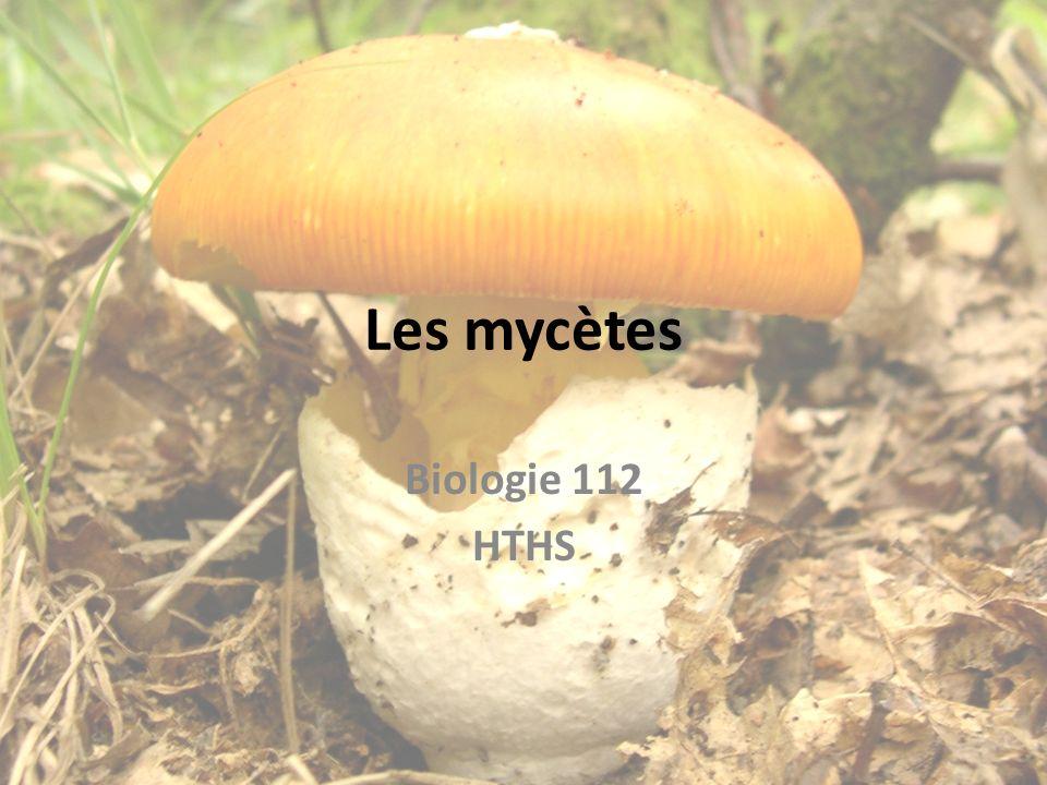 Les mycètes Biologie 112 HTHS