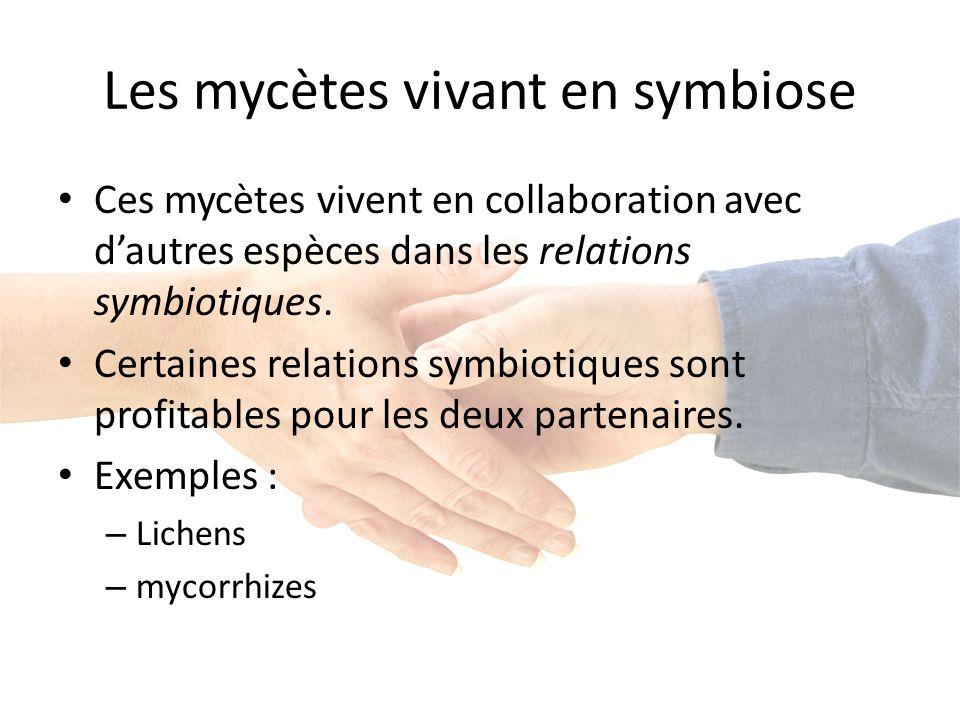 Les mycètes vivant en symbiose Ces mycètes vivent en collaboration avec dautres espèces dans les relations symbiotiques.