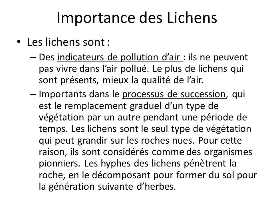 Importance des Lichens Les lichens sont : – Des indicateurs de pollution dair : ils ne peuvent pas vivre dans lair pollué.