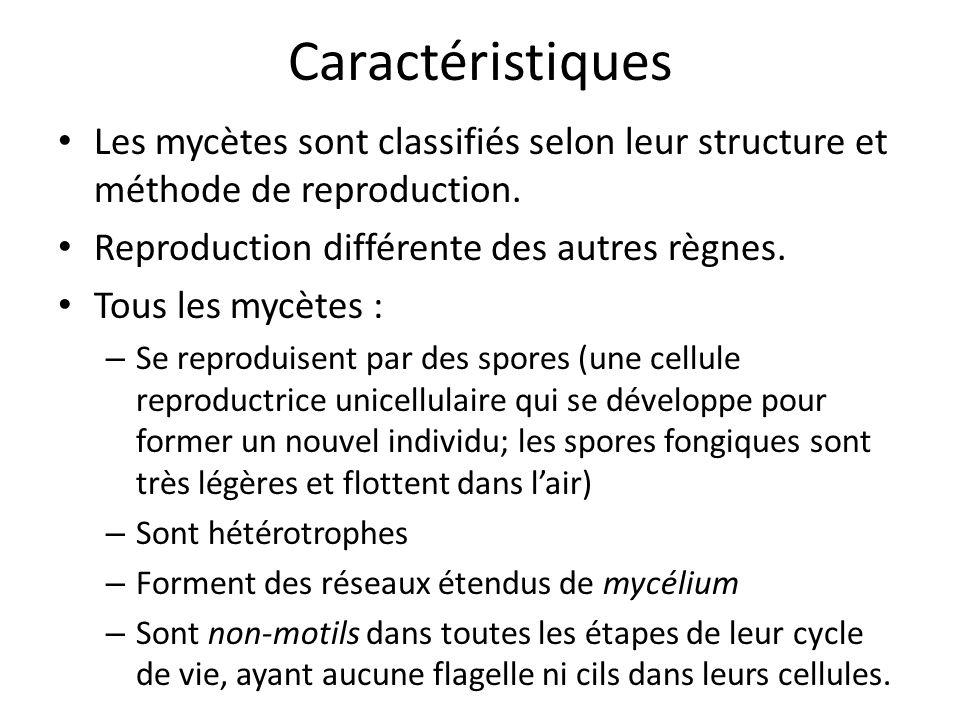 Caractéristiques Les mycètes sont classifiés selon leur structure et méthode de reproduction.