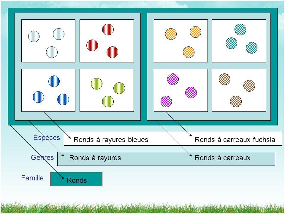 Famille Genres Espèces Ronds à rayures bleuesRonds à carreaux fuchsia Ronds à rayuresRonds à carreaux Ronds