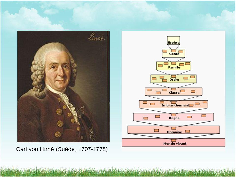 Carl von Linné (Suède, 1707-1778)