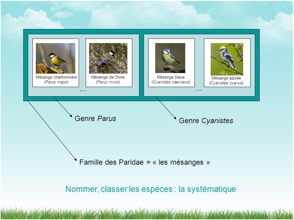 Famille des Paridae = « les mésanges » … Genre Cyanistes … Genre Parus Mésange charbonnière (Parus major) Mésange de Chine (Parus minor) Mésange bleue