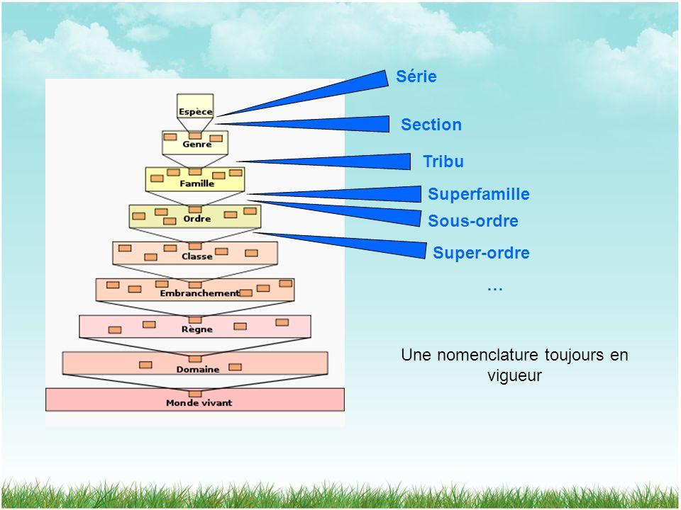 Série Section Tribu Superfamille Sous-ordre Super-ordre … Une nomenclature toujours en vigueur