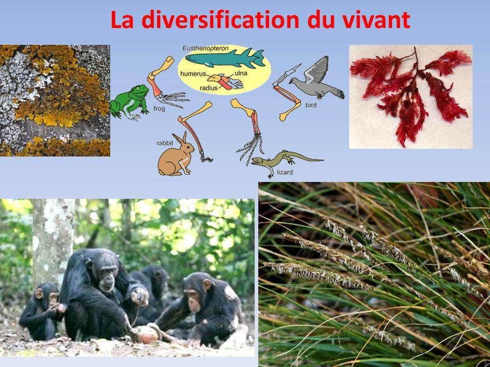 A. Des mécanismes de diversifications géniques Cf TP 8, atelier 1 et 4