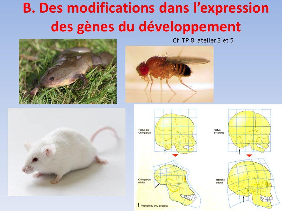 B. Des modifications dans lexpression des gènes du développement Cf TP 8, atelier 3 et 5