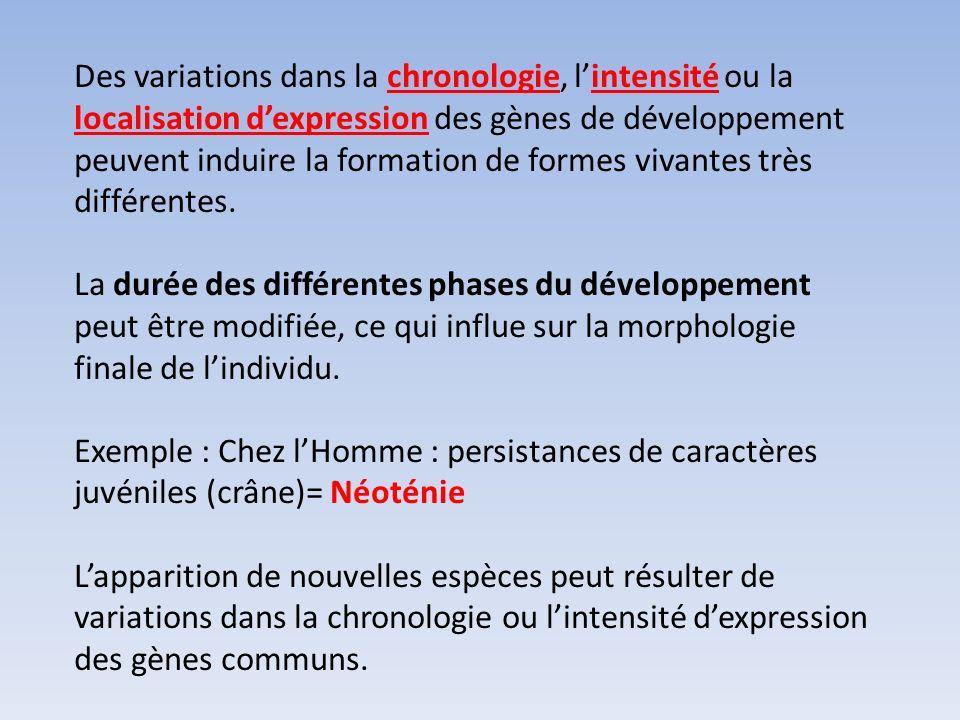Des variations dans la chronologie, lintensité ou la localisation dexpression des gènes de développement peuvent induire la formation de formes vivant