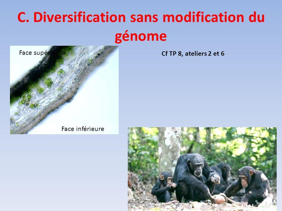 C. Diversification sans modification du génome Face supérieure Face inférieure Cf TP 8, ateliers 2 et 6