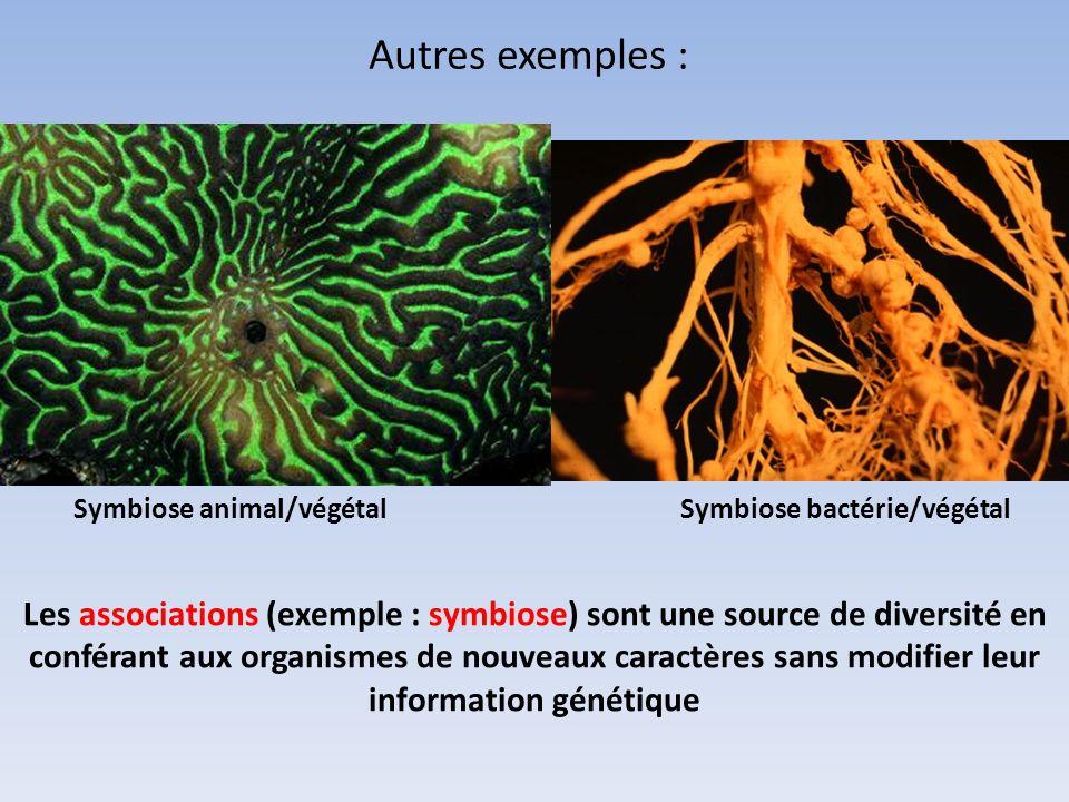 Autres exemples : Symbiose animal/végétalSymbiose bactérie/végétal Les associations (exemple : symbiose) sont une source de diversité en conférant aux