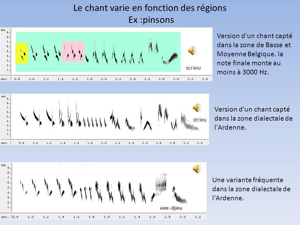 Le chant varie en fonction des régions Ex :pinsons Version d'un chant capté dans la zone de Basse et Moyenne Belgique. la note finale monte au moins à