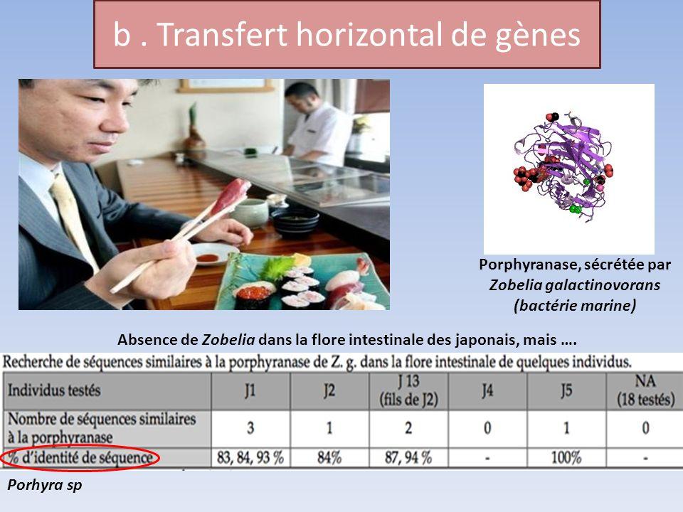b. Transfert horizontal de gènes Porhyra sp Porphyranase, sécrétée par Zobelia galactinovorans (bactérie marine) Absence de Zobelia dans la flore inte