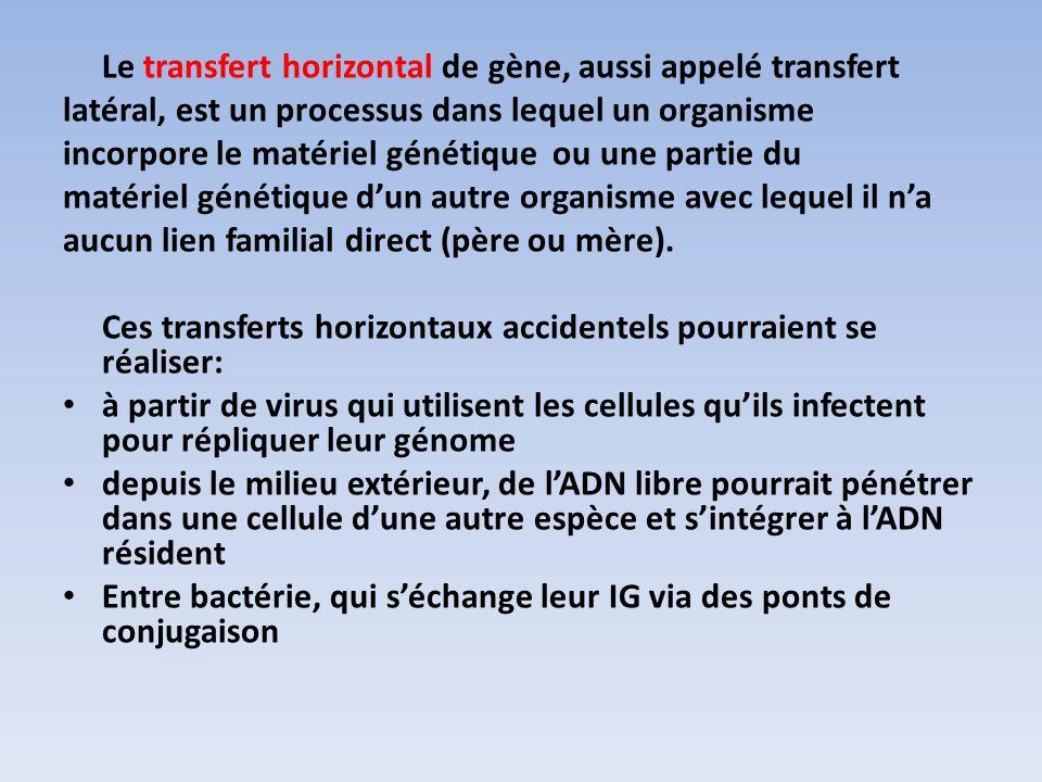 Le transfert horizontal de gène, aussi appelé transfert latéral, est un processus dans lequel un organisme incorpore le matériel génétique ou une part