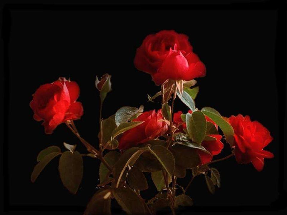 La vie est comme une pièce de monnaie. Côté pile: le plaisir. Côté face: la douleur. On ne voit qu'un seul côté à la fois. Quoi qu'il en soit, n'oubli
