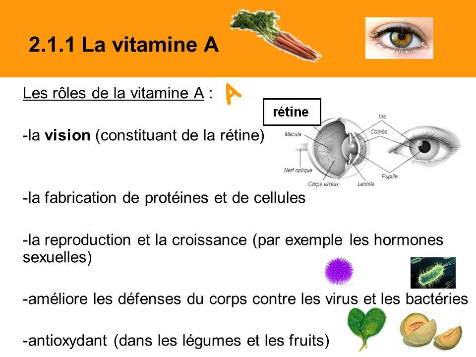 Les rôles de la vitamine A : -la vision (constituant de la rétine) -la fabrication de protéines et de cellules -la reproduction et la croissance (par exemple les hormones sexuelles) -améliore les défenses du corps contre les virus et les bactéries -antioxydant (dans les légumes et les fruits) 2.1.1 La vitamine A A