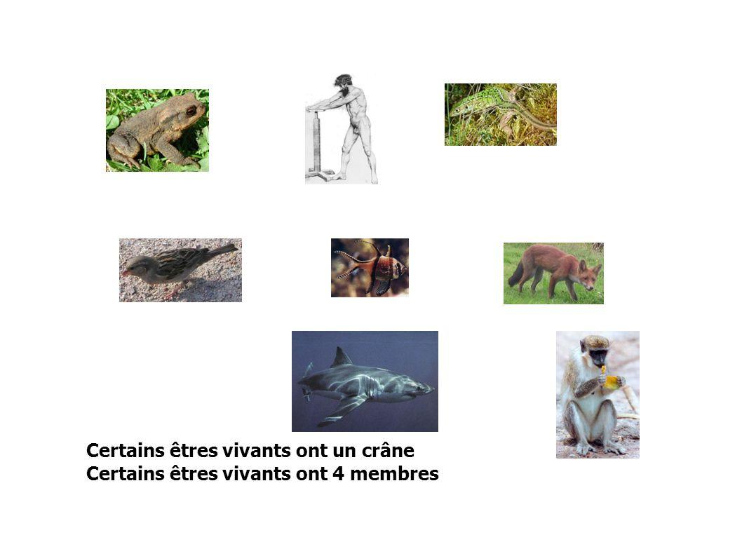 possèdent un crâne : CRANIATES possèdent 4 membres : TETRAPODES possèdent un pouce opposable : PRIMATES pouce opposable Cette représentation correspond à la classification vue en 6e
