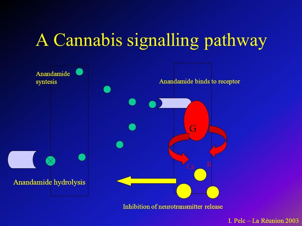 Cannabis: une escalade vers labus dautres drogues .