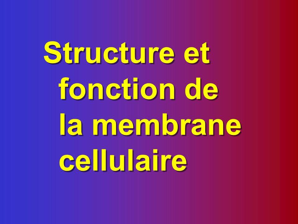Frontière entre lintérieur et lextérieur de la cellule Contrôle des entrées et des sorties de la cellule (échanges cellulaires) Compartiments intérieurs de la cellules (organites membranaires)
