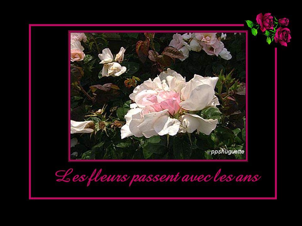Les fleurs passent avec les ans ppshuguette