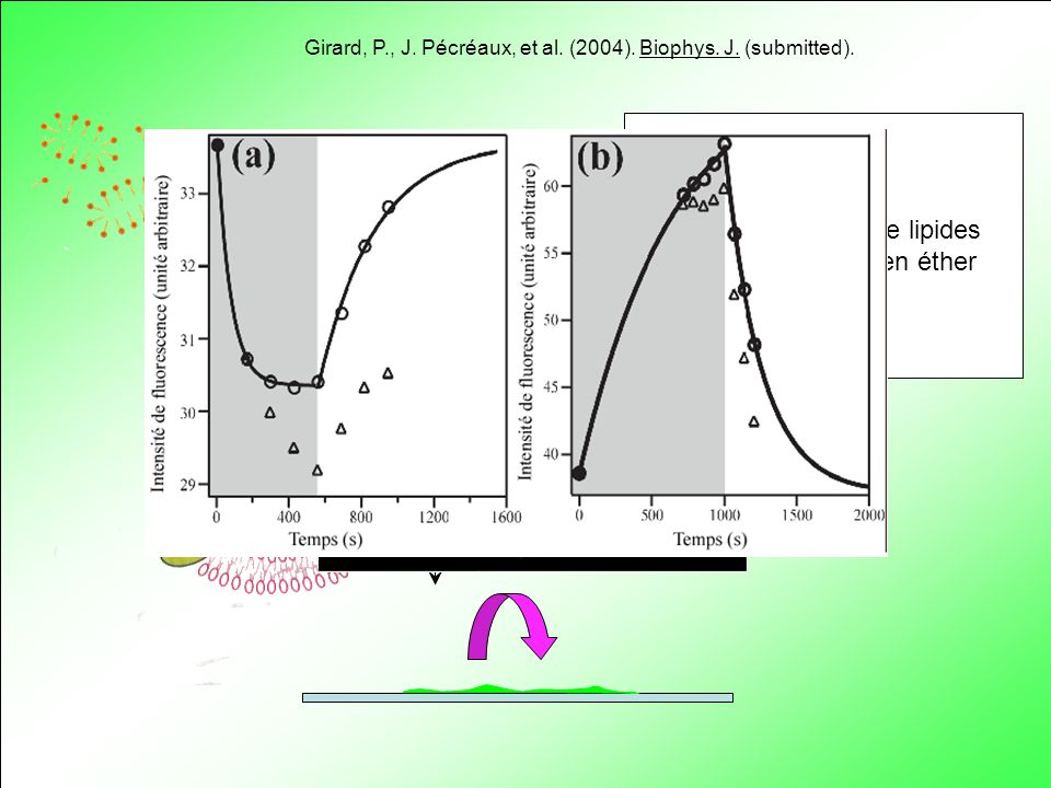 Solution de lipides et de BR en éther Girard, P., J. Pécréaux, et al. (2004). Biophys. J. (submitted). + 200 nm H+H+