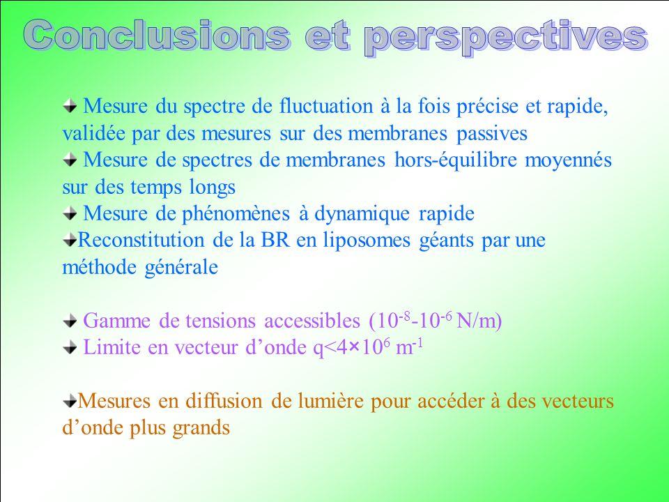 Mesure du spectre de fluctuation à la fois précise et rapide, validée par des mesures sur des membranes passives Mesure de spectres de membranes hors-