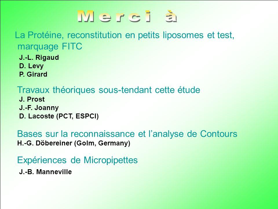 La Protéine, reconstitution en petits liposomes et test, marquage FITC J.-L. Rigaud D. Levy P. Girard Travaux théoriques sous-tendant cette étude J. P