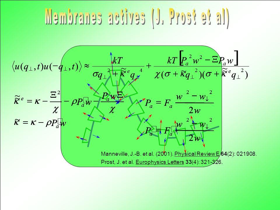 Pécréaux, J. et al. (2004). European Physical Journal E (accepted).
