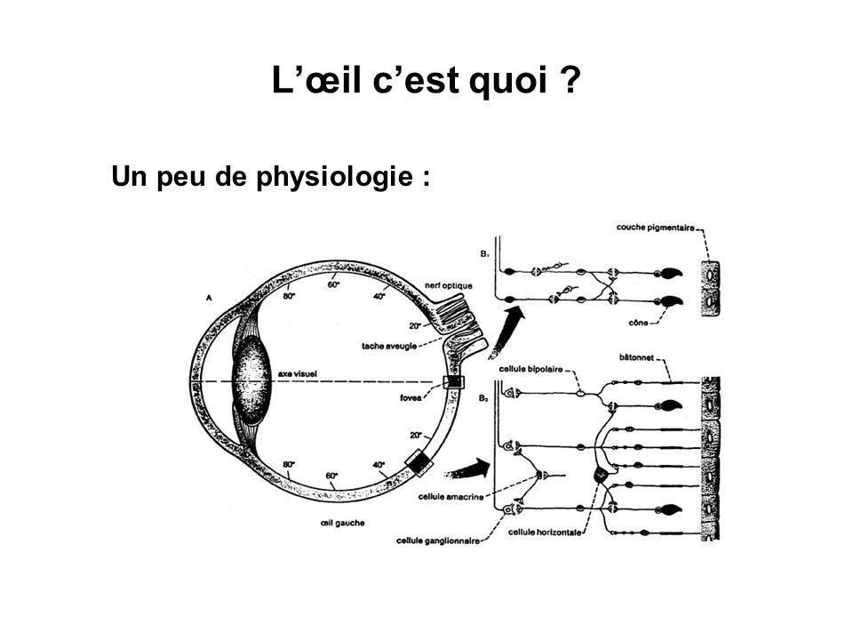 Cônes et Bâtonnets Cônes ( ~ 7 10 6 ) prépondérants dans la fovéa (2°) : Vision diurne Bâtonnets ( ~ 120 10 6 ) prépondérants en périphérie : Vision nocturne