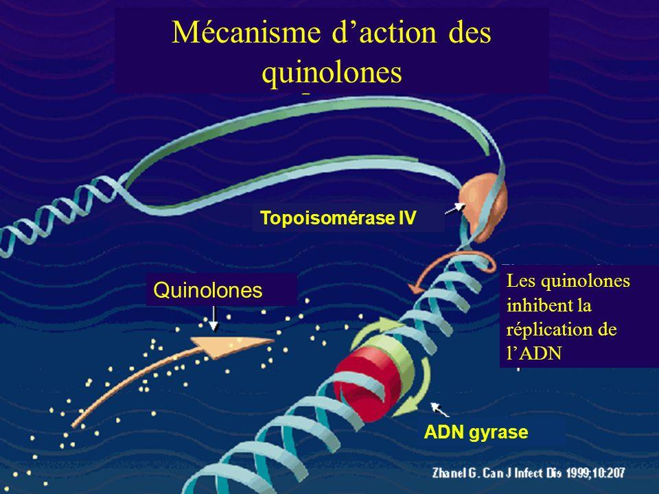 Mécanisme daction des quinolones Quinolones Les quinolones inhibent la réplication de lADN Topoisomérase IV ADN gyrase