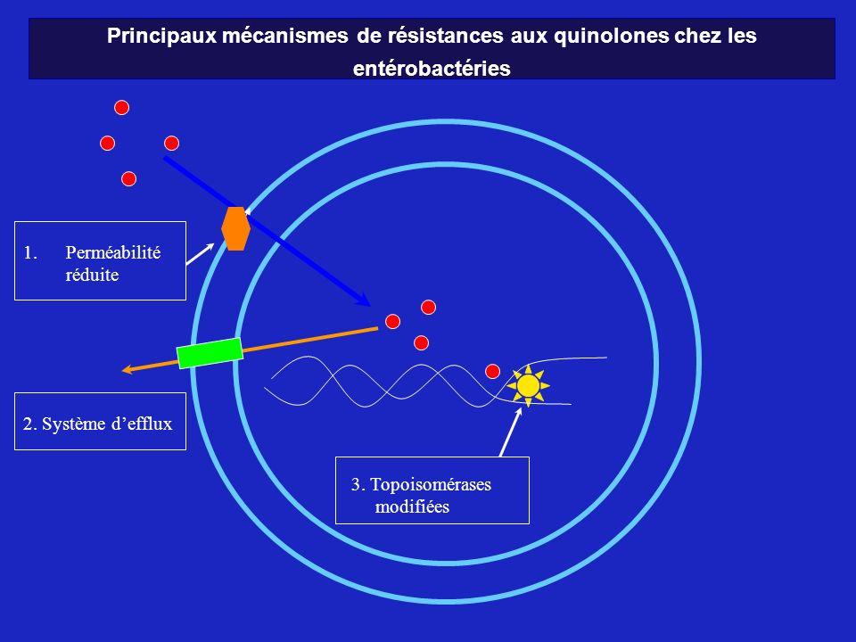 Principaux mécanismes de résistances aux quinolones chez les entérobactéries 1. 1.Perméabilité réduite 3. Topoisomérases modifiées 2. Système defflux