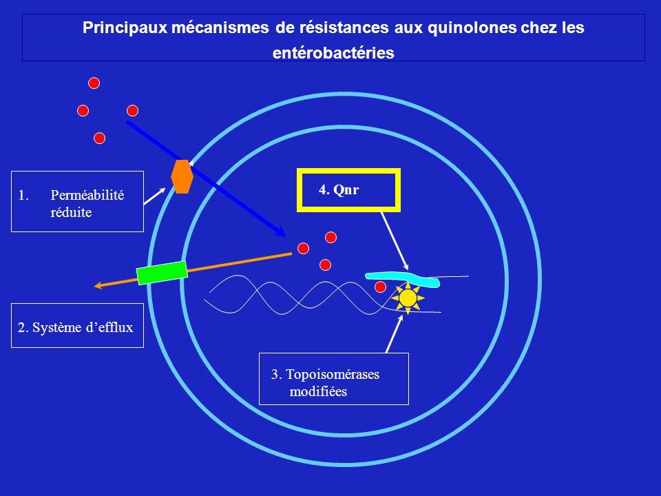 Principaux mécanismes de résistances aux quinolones chez les entérobactéries 1. 1.Perméabilité réduite 3. Topoisomérases modifiées 4. Qnr 2. Système d