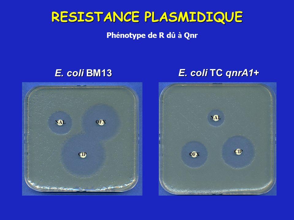 E. coli BM13 E. coli TC qnrA1+ RESISTANCE PLASMIDIQUE Ph é notype de R d û à Qnr NAL CIP OFX CIP OFX NAL
