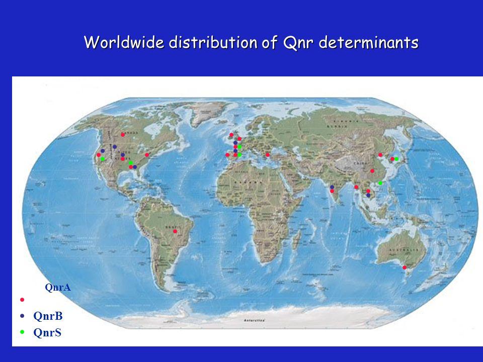 Worldwide distribution of Qnr determinants QnrA QnrB QnrS