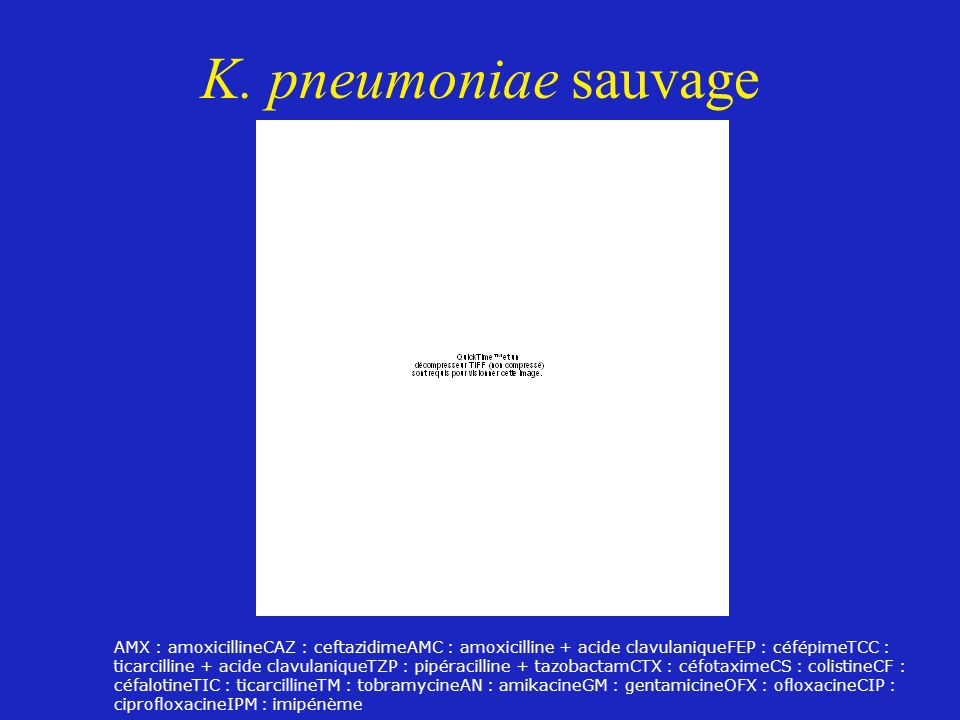 K. pneumoniae sauvage AMX : amoxicillineCAZ : ceftazidimeAMC : amoxicilline + acide clavulaniqueFEP : céfépimeTCC : ticarcilline + acide clavulaniqueT