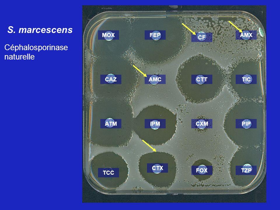 S. marcescens Céphalosporinase naturelle AMX TIC PIP TZP CF CTT CXM FOX CTX FEPMOX CAZAMC IPMATM TCC