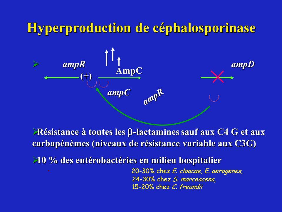 Hyperproduction de céphalosporinase ampR ampD ampR ampD Résistance à toutes les -lactamines sauf aux C4 G et aux carbapénèmes (niveaux de résistance v
