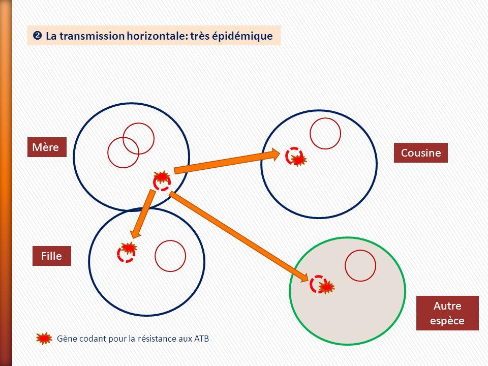 La transmission horizontale: très épidémique Gène codant pour la résistance aux ATB Mère Fille Cousine Autre espèce