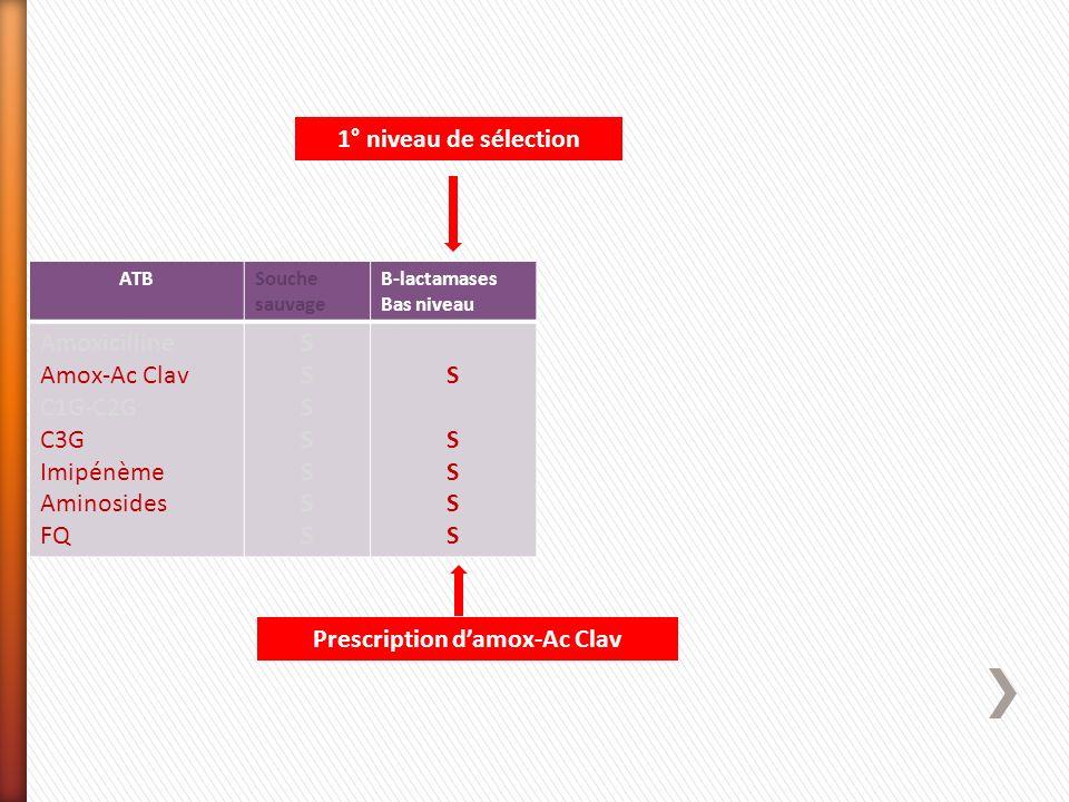 ATBSouche sauvage Β-lactamases Bas niveau Amoxicilline Amox-Ac Clav C1G-C2G C3G Imipénème Aminosides FQ SSSSSSSSSSSSSS SSSSSSSSSS Prescription damox-A