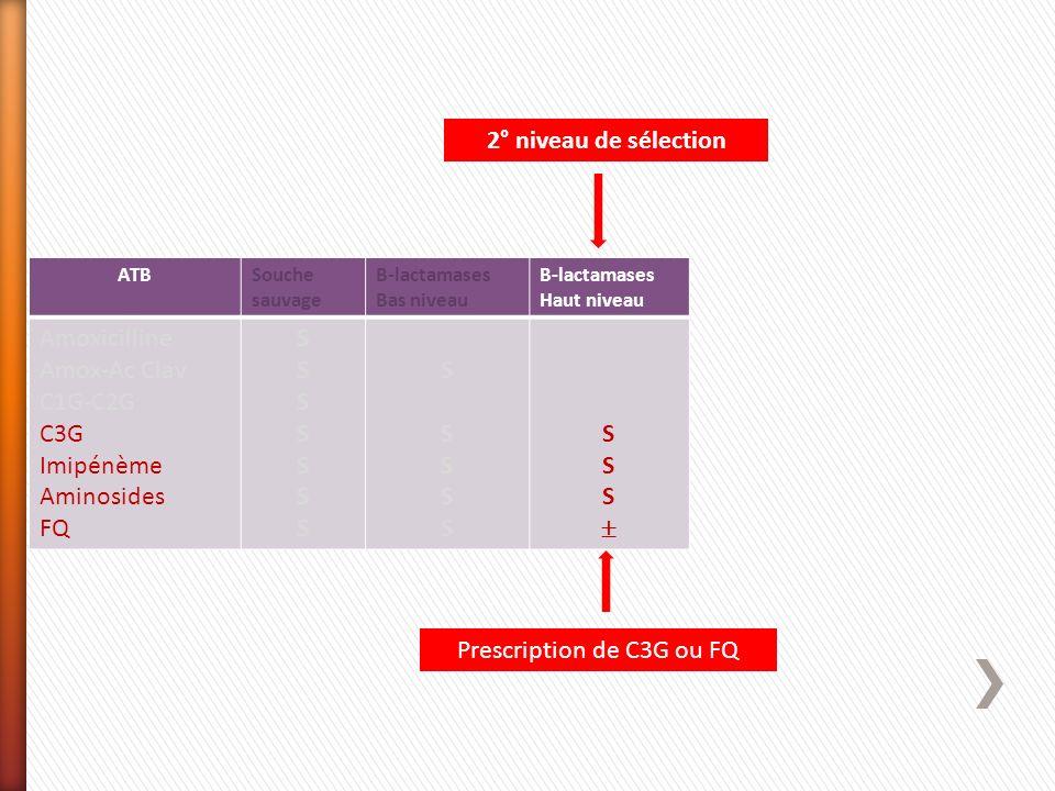 ATBSouche sauvage Β-lactamases Bas niveau Β-lactamases Haut niveau Amoxicilline Amox-Ac Clav C1G-C2G C3G Imipénème Aminosides FQ SSSSSSSSSSSSSS SSSSSS