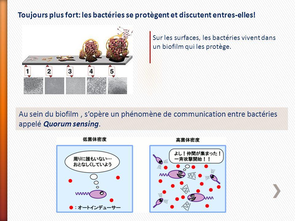 Au sein du biofilm, sopère un phénomène de communication entre bactéries appelé Quorum sensing. Toujours plus fort: les bactéries se protègent et disc