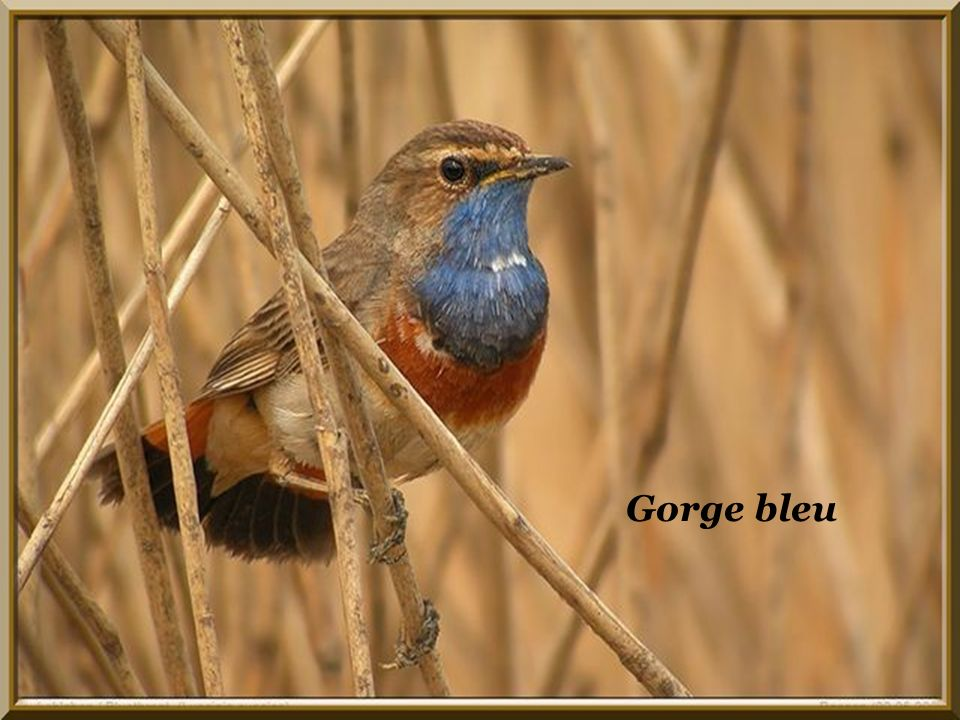 Création Renée Clerc. Musique Compagnons de la chanson. Si tous les oiseaux du monde.