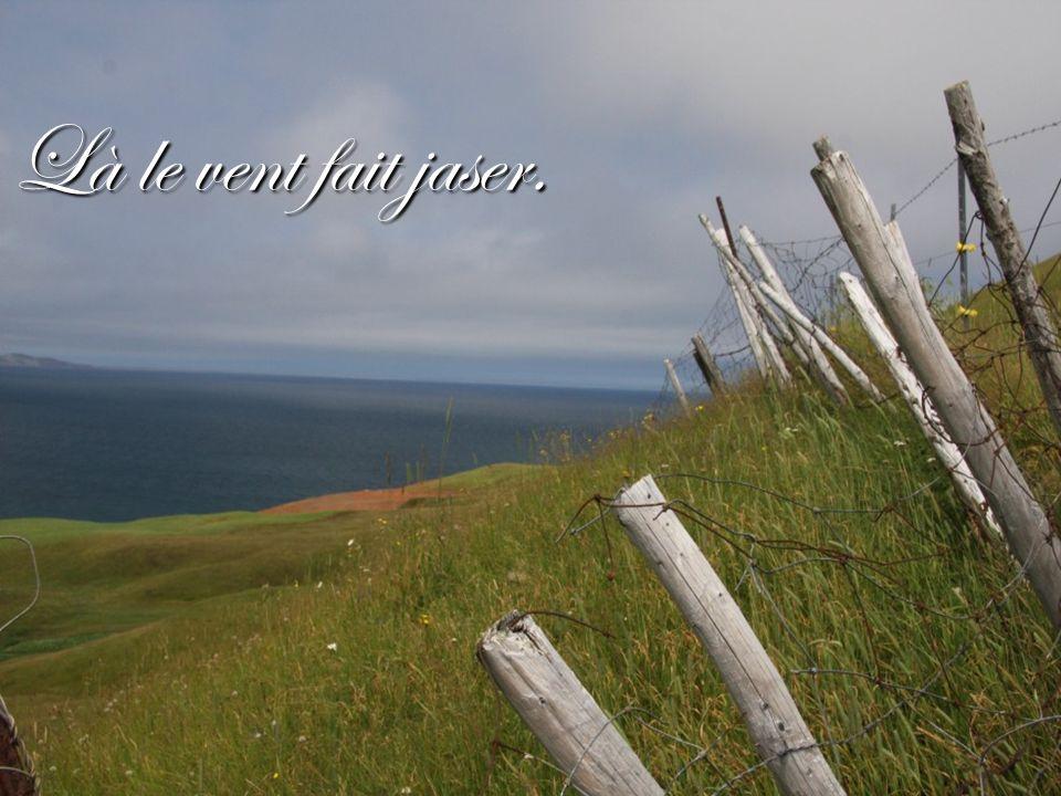 À chaque fois quun visiteur quitte les Îles, cest un adieu difficile, mais on se dit, ils reviendront.